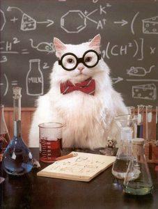 professeur-chat